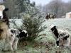 mouton neige gite yourte