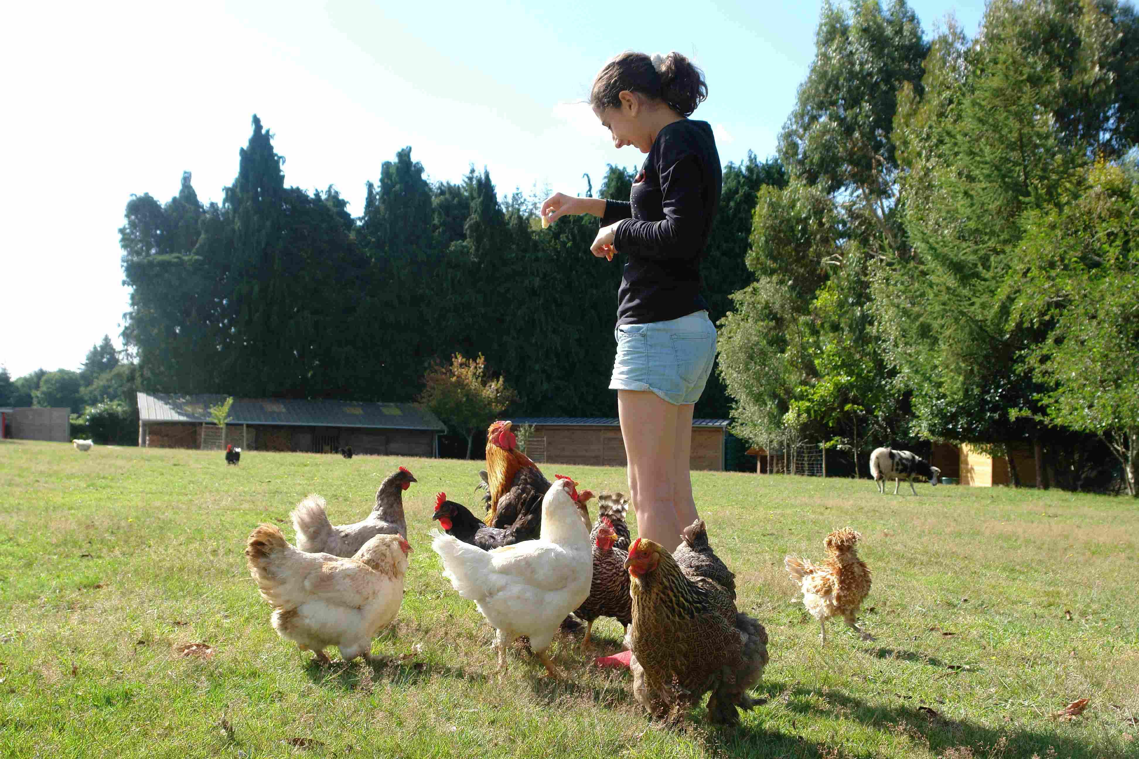 Mini ferme de Breizh Yourte
