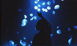 L-Aquarium-des-meduses_breizh yourte
